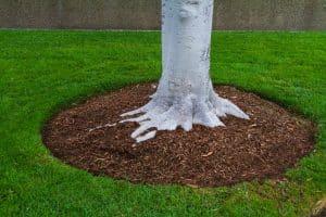 Garden Landscaping Arndell Park
