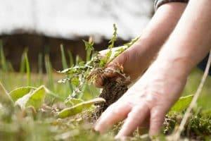 Gardening Service Warriewood