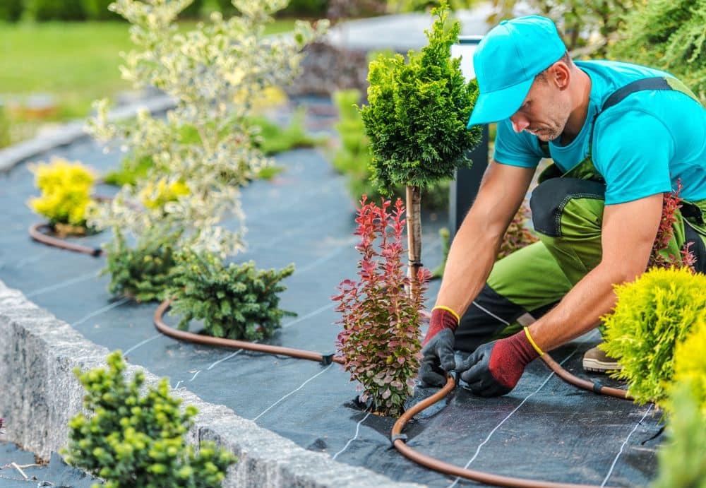 10 Great Backyard Landscaping Ideas